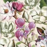 Magnolienblüten weiß & rosé - Magnolia blossoms white and pink - Fleurs Magnolia blanc et rose - Fleurs Magnolia blanc et rose