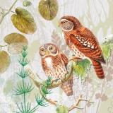 Hübsches Eulenpaar - Pretty Owl couple - Couple hibou jolie