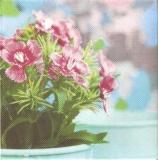 Hübsche Blume im Blumentopf - Pretty flower in flower pot - Jolie fleur au pot de fleurs