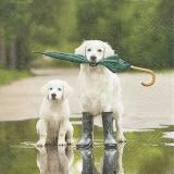 Hunde in Pfütze mit Regenschirm & Gummistiefeln - Dogs in puddle with umbrella and rubber boots, Wellingtons - Chiens en flaque avec des parapluies et des bottes en caoutchouc