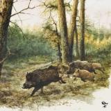 Wildschweinfamilie im Wald - Wild boar family in the forest - Famille de sanglier dans les bois