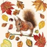 Eichhörnchen auf einem Ast - Squirrel on a branch - Écureuil sur une branche darbre