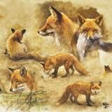Schöner Fuchs - Pretty Fox - beau renard