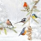 Futterplatz für alle Vögel - Feeding place for all birds - Aire dalimentation pour les oiseaux