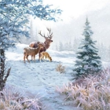 Rehfamilie, Rotwildfamilie - Deer family - famille de Deer