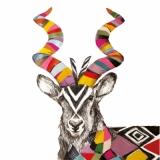 Afrikanische Antilope, Kudu - African antelope, Kudu - Antilope africaine, Kudu