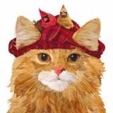 Katze mit 2 Vögeln auf der Kappe - Cat with 2 birds on the cap - Chat avec 2 oiseaux sur le bonnet