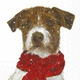 Hund mit Schal - Dog with scarf - Chien avec foulard