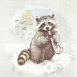 Kleiner Waschbär - Little Raccoon - peu racoon
