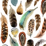 Wunderschöne Federn - Beautiful feathers - belles plumes