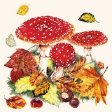 Fliegenpilze im Laub - Fly agarics in the foliage -Fausse oronges dans le feuillage