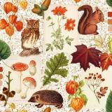 Eule, Eichhörnchen, Igel, Blätter, Pilze, Blumen, Laub Physalis.... - Owl, squirrel, hedgehog, sheets, mushrooms, flowers, foliage, Physalis.... - Hibou, écureuil, hérisson, feuilles, champignons, fle
