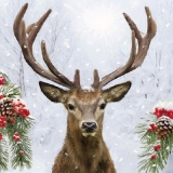 Hirsch im Schneefall - Deer, stag in the snowfall - Cerf dans la chute de neige