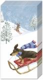 Hunde beim Schlitten und Ski fahren - Dogs are skiing and sledding - Les chiens font du ski et de la luge