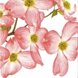 Rosa Blütenpracht - Pink blossoms - Fleurs roses