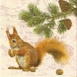 Eichhörnchen sammelt Futter für den Winter - Squirrel collects food for winter - Lécureuil collecte des aliments pour lhiver