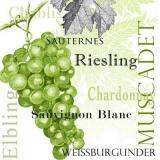 Trauben, Weißwein, Riesling, Chablis, Weissburgunder, Sauvignon blanc, Muscadet, Elbling, Sauternes - White wine - vin blanc