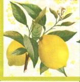Erntereife Zitronen - Fresh lemons - Citrons frais
