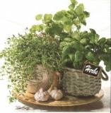 Frische Kräuter und Knoblauch - Fresh herbs and garlic - Herbes fraîches et ail