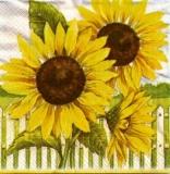 Sonnenblumen am Zaun