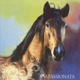 Wunderschönes PFerd - Beautiful horse - Beau cheval