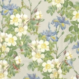 Iris & Buschwindröschen - Iris and Wood anemone - Iris et anémone de bois