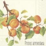 Erntereife Aprikosen - Prunus armeniaca - Crop apricots -Abricots