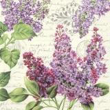 Flieder und nostalgischer Brief - Lilac and nostalgic letter - lilas et lettre nostalgique