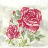Wunderschöner Rosenstock, rot - Beautiful rosebush, red -Beau rosier, rouge