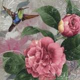 Kolibri besucht Pfingstrosen - Hummingbird visits peonies - Le colibri visite des pivoines
