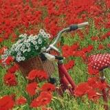 Fahrrad im Mohnblumenfeld mit Margeriten im Korb - Bicycle in the poppy field with daisies in the basket - Vélo dans le champ de coquelicots avec des marguerites dans le panier