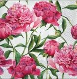 Pfingstrosenblüte - peony blossom - fleur de pivoine