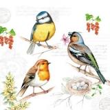 3 Vögel & 1 Vogelnest - 2 birds and a bid nest - 3 oiseaux et 1 nid doiseau