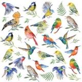 Bunte Vogelwelt - Colorful birdlife - Monde d oiseau multicolore