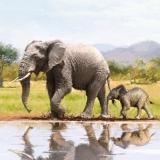 Elefantenkuh mit ihrem Kalb - Elephant cow with her calf - Vache éléphant avec son veau