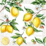 Pflückreife Zitronen - Pick-ripe lemons - Citrons mûrs