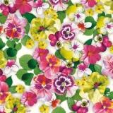 Überall hübsche Stiefmütterchen - Pretty pansies everywhere - De jolies pensées partout