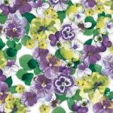 Überall hübsche Stiefmütterchen, lila - Pretty pansies everywhere,purple - De jolies pensées partout pourpre