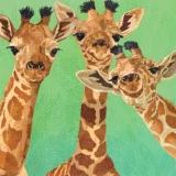 3 Giraffenfreunde - 3 giraffe friends - 3 amis de la girafe