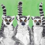 3 Lemurenfreunde, Erdmännchen - 3 Lemurs friends, meerkat - 3 lemurs amis, suricates