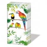 Tropische Vögel, Papagei, Tukan - Tropical birds, parrot, toucan - Oiseaux tropicaux, perroquet, toucan
