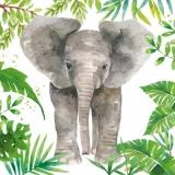 Elefantenbaby, Elefant - Elephant baby, elephant - Bébé éléphant, éléphant