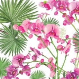 tropische Orchidee - tropical orchid - orchidée tropicale