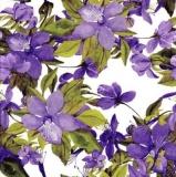 Wunderschöne lila Clematis - Beautiful purple Clematis - Belle Clématite mauve