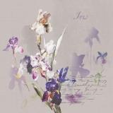 Iris mit Irisschatten & Geschriebenes - Iris & iris shadow & Writing - Iris & iris ombre et écriture