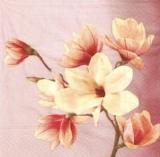 Hübsche Magnolien - Pretty magnolias - Jolis magnolias