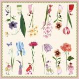 Blumenfrauen & Schmetterlinge - Flower Ladies & Butterflies - femmes de fleurs et papillons