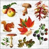 Pilze,Eichhörnchen, Eicheln, Beeren,Äpfel & Blätter