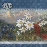 3 verschiedene Alpenblumen vor Berglandschaft - 3 different alpine flowers in front of mountain landscape - 3 fleurs alpines différentes en face du paysage de montagne