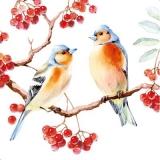 2 Buchfinken sitzen auf einen Vogelbeerenbaum - 2 chaffinches sitting on a rowan berry tree - 2 pinson assis sur un arbre de rowan berry -